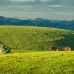 Pastos y alimentación equina y gestión de pastos - Equaria Ibio
