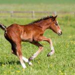 Programa criadores de caballos Equaria Ibio 2019